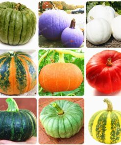 10 Pcs Bag Pumpkin Bonsai Organic Vegetables Nutrient Rich Food NON GMO Edible Bonsai Plants For 1 247x296 - 10 pcs 16 kind of Color Rare Pumpkin Seeds - vegetable-seeds -