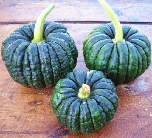10 Pcs Bag Pumpkin Bonsai Organic Vegetables Nutrient Rich Food NON GMO Edible Bonsai Plants For 3 510x462 - 10 pcs 16 kind of Color Rare Pumpkin Seeds - vegetable-seeds -