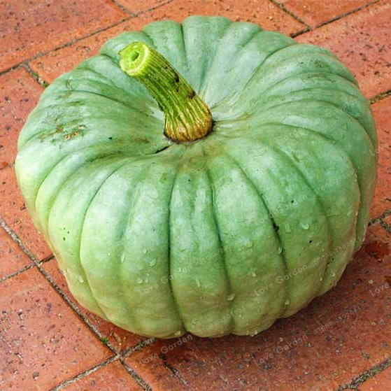 10 Pcs Bag Pumpkin Bonsai Organic Vegetables Nutrient Rich Food NON GMO Edible Bonsai Plants For 5 - 10-Pcs-Bag-Pumpkin-Bonsai-Organic-Vegetables-Nutrient-Rich-Food-NON-GMO-Edible-Bonsai-Plants-For_5