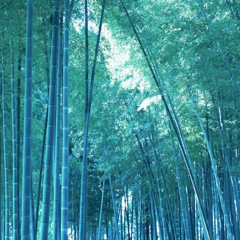 1267 3hhvq6 - 50 Pcs Rare Blue Bamboo Seeds for Diy Home Garden - bonsai-tree, bamboo -