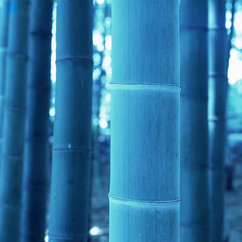 1267 qiej5g - 50 Pcs Rare Blue Bamboo Seeds for Diy Home Garden - bonsai-tree, bamboo -