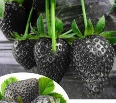1361 nwkyya - 500 Pcs Strawberry Seeds Fragaria Fruit Seeds For Home Garden - fruit-seeds -