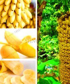 Big Promotion 100 pcs bag rare double Potted banana garden bonsai tree Organic fruit flores mini 1 247x296 - Mega Shop