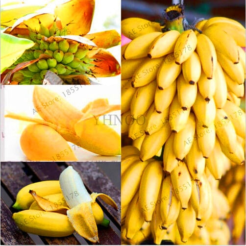 Big Promotion 100 pcs bag rare double Potted banana garden bonsai tree Organic fruit flores mini 2 - 100pcs Rare Giant Banana Seeds Fruit Trees Bonsai - fruit-seeds -