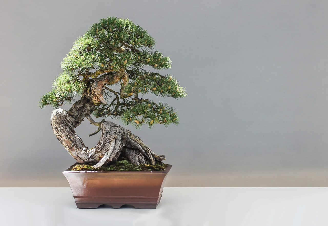 bonsai 1805501 12801 - Home
