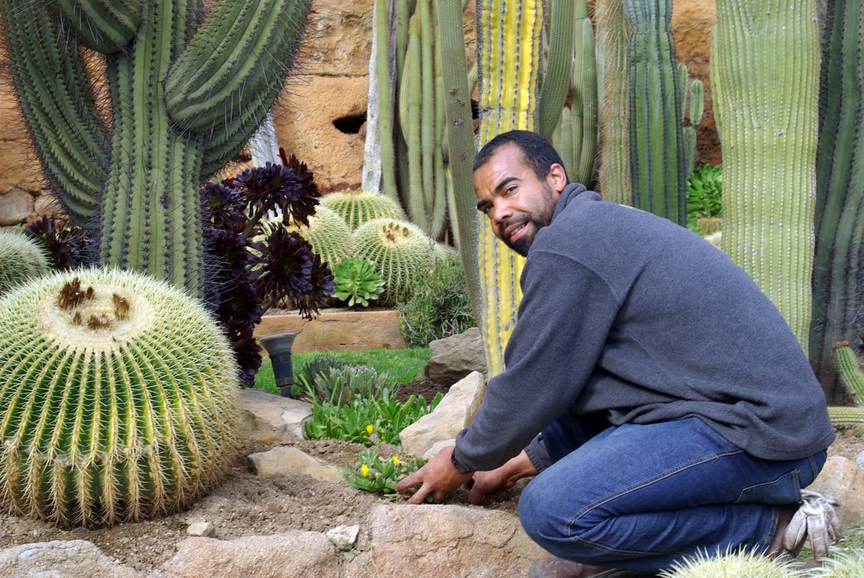 1536432161 when do i plant succulents learn about growing succulents in different climates takeseeds com - When Do I Plant Succulents – Learn About Growing Succulents In Different Climates