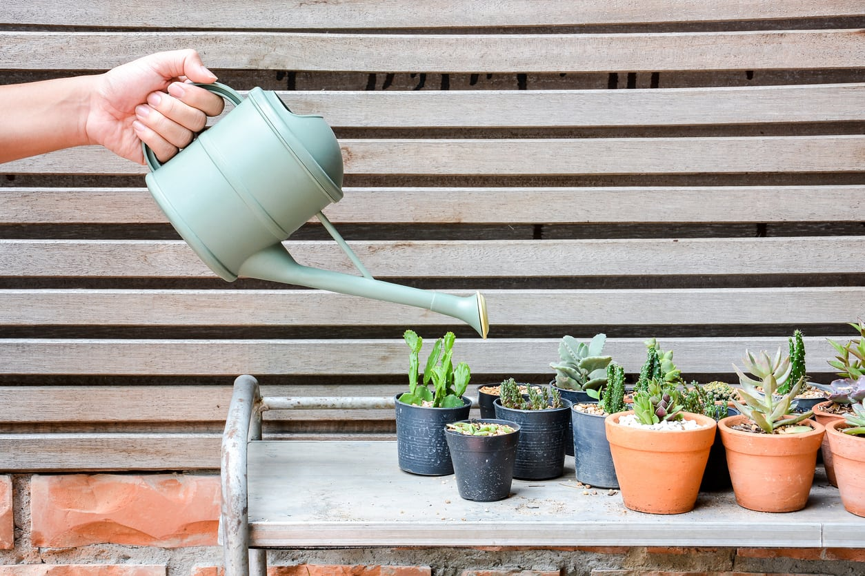 1536822021 avoiding succulent water problems what kind of water to use for succulents takeseeds com - Avoiding Succulent Water Problems – What Kind Of Water To Use For Succulents