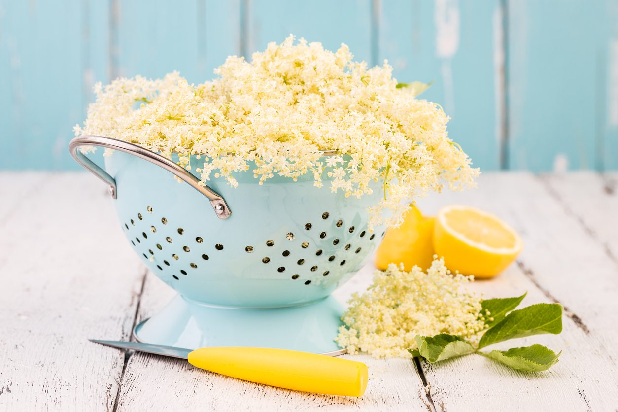 1537125782 learn how and when to pick elderflowers takeseeds com - Learn How And When To Pick Elderflowers