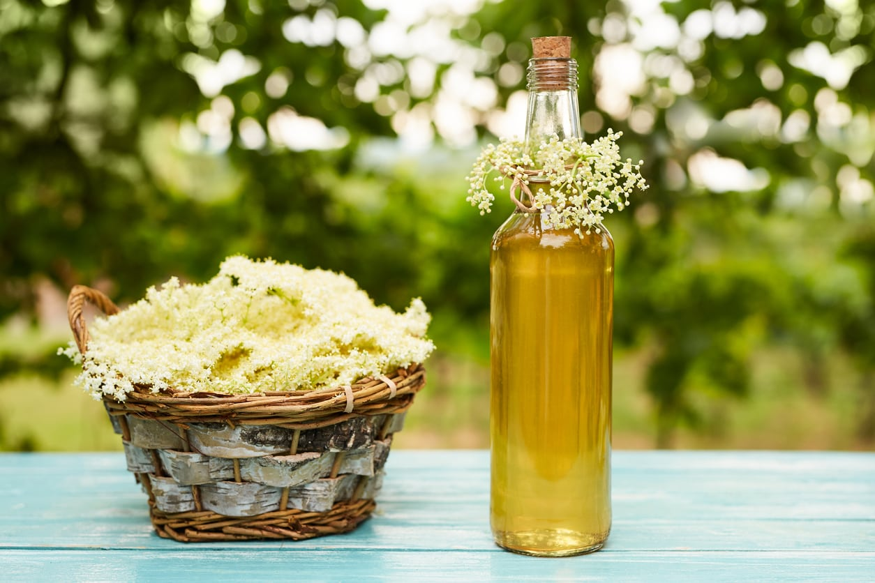 1537949604 common elderflower uses learn about elderflower recipes and ideas takeseeds com - Common Elderflower Uses – Learn About Elderflower Recipes And Ideas