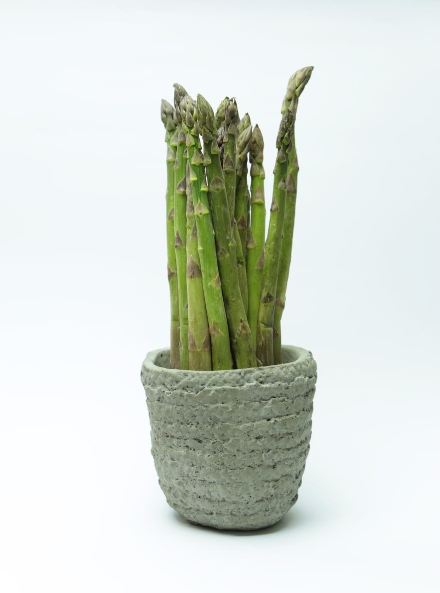 1538995476 caring for container grown asparagus takeseeds com - Caring For Container Grown Asparagus