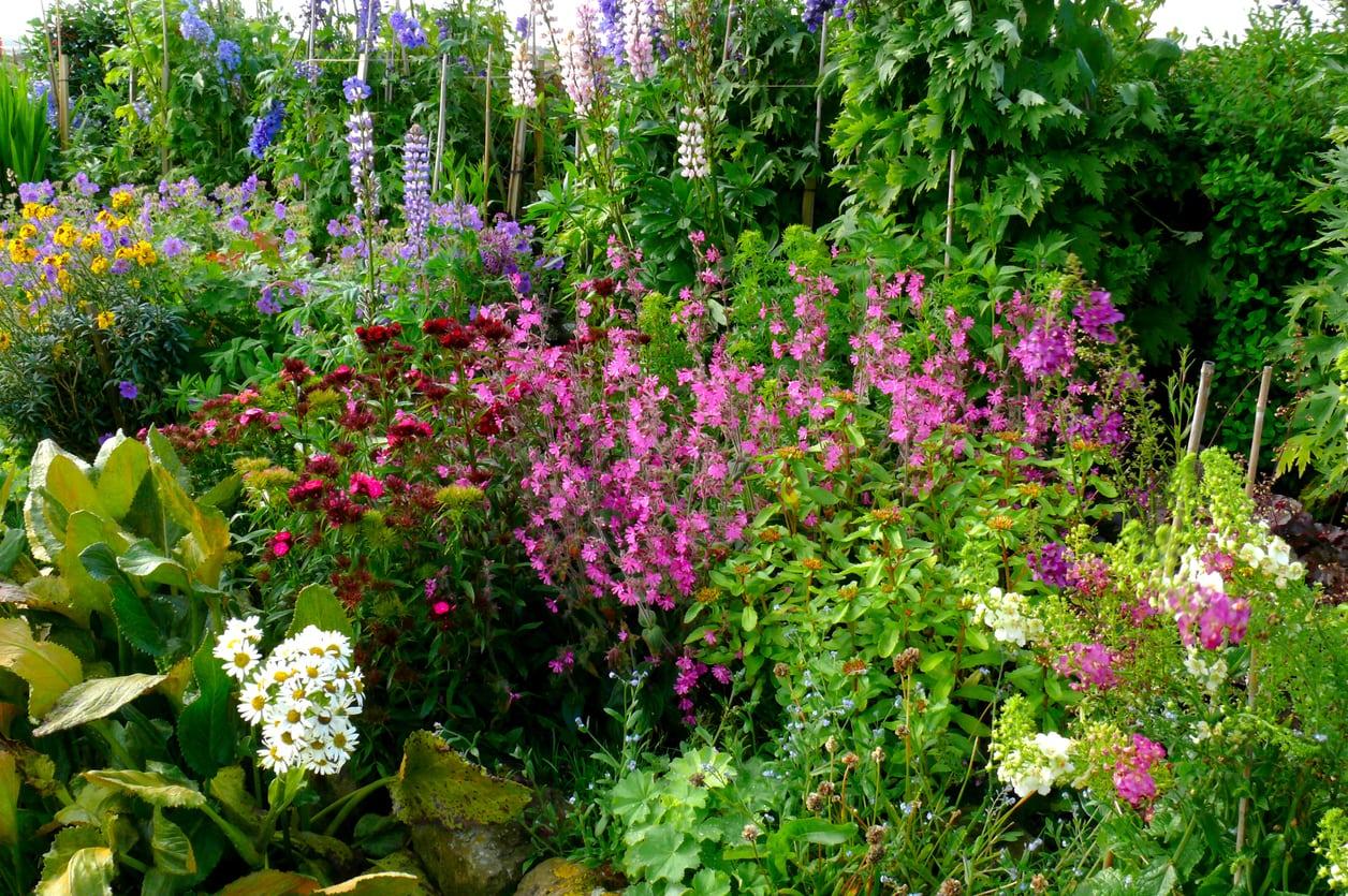 1541548549 what is a bedhead garden creating messy garden designs takeseeds com - What Is A Bedhead Garden – Creating Messy Garden Designs