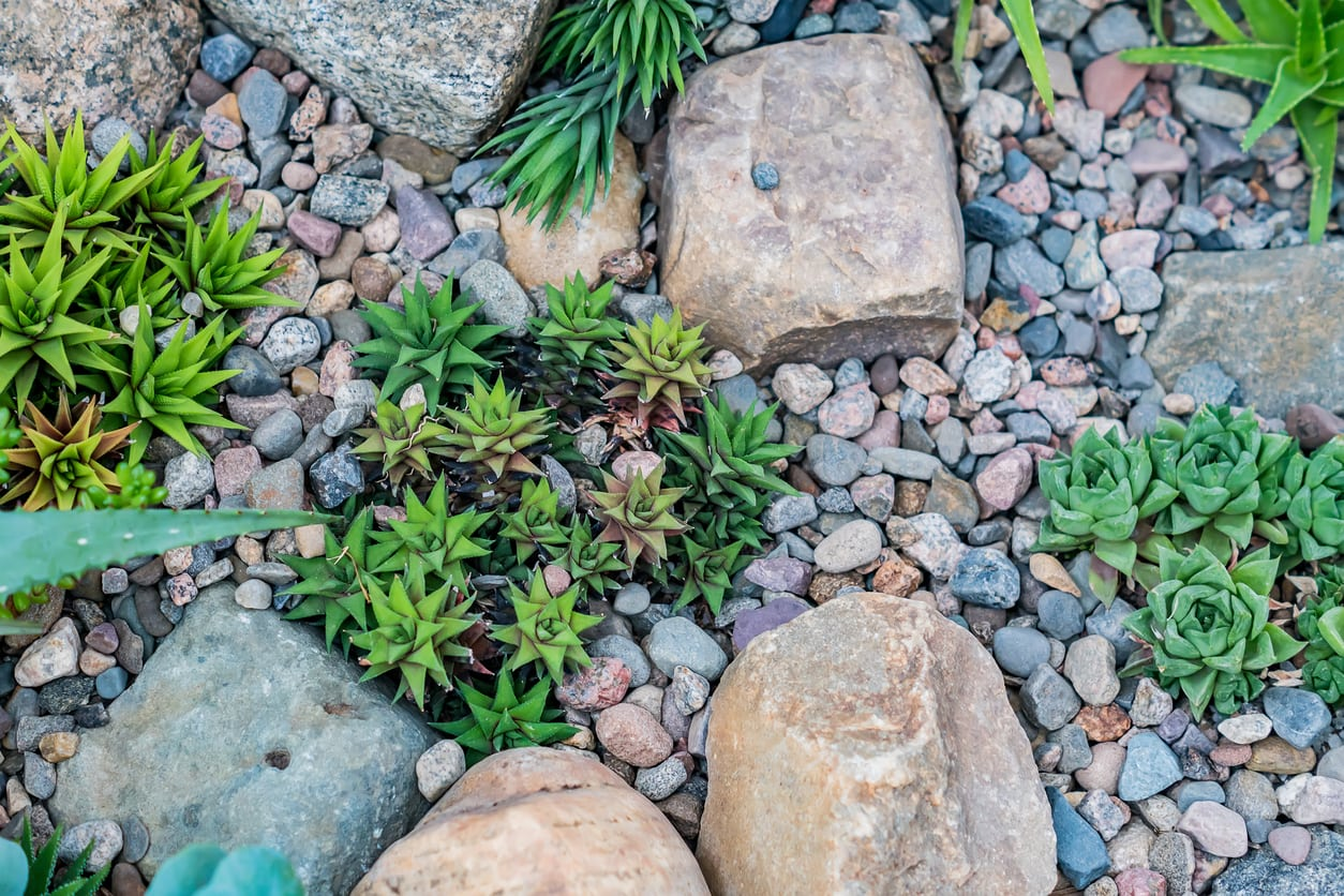 1542024491 succulent planting time in northwestern u s growing succulents in the northwest takeseeds com - Succulent Planting Time In Northwestern U.S. – Growing Succulents In The Northwest
