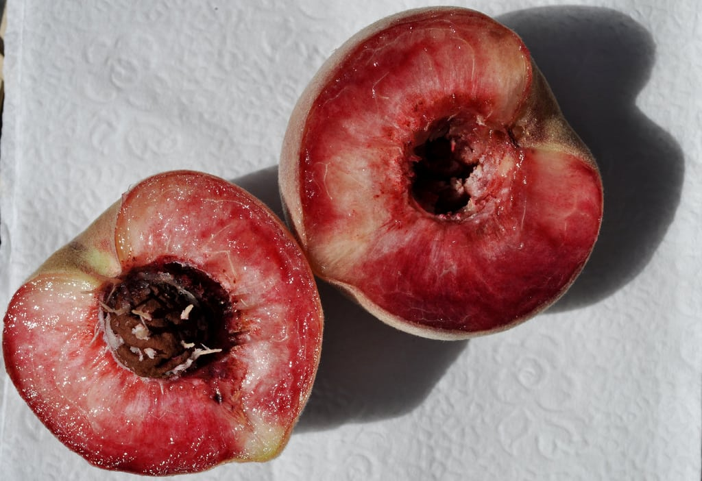 1543582339 how to grow indian blood peach trees takeseeds com - How To Grow Indian Blood Peach Trees