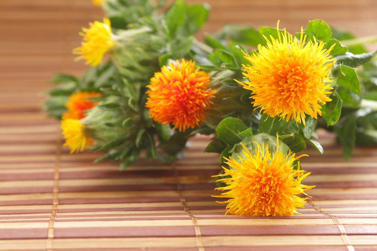 1545486219 safflower harvest guide learn how and when to pick safflowers takeseeds com - Safflower Harvest Guide – Learn How And When To Pick Safflowers