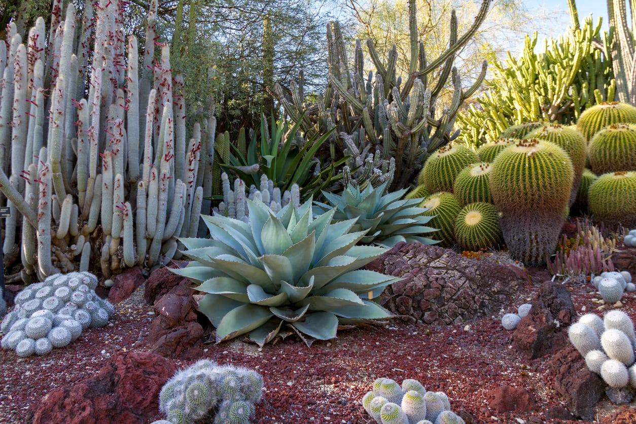 1545529453 desert garden ideas tips for southwest landscaping and outdoor design takeseeds com - Desert Garden Ideas – Tips For Southwest Landscaping And Outdoor Design