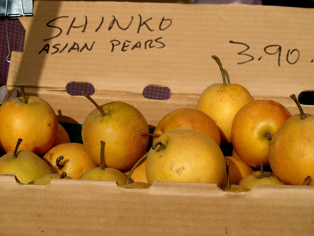 1547173470 caring for shinko asian pears how to grow shinko pears in the landscape takeseeds com - Caring For Shinko Asian Pears – How To Grow Shinko Pears In The Landscape