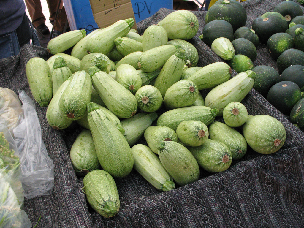 1548990645 learn about growing marrow squash in the garden takeseeds com - Learn About Growing Marrow Squash In The Garden