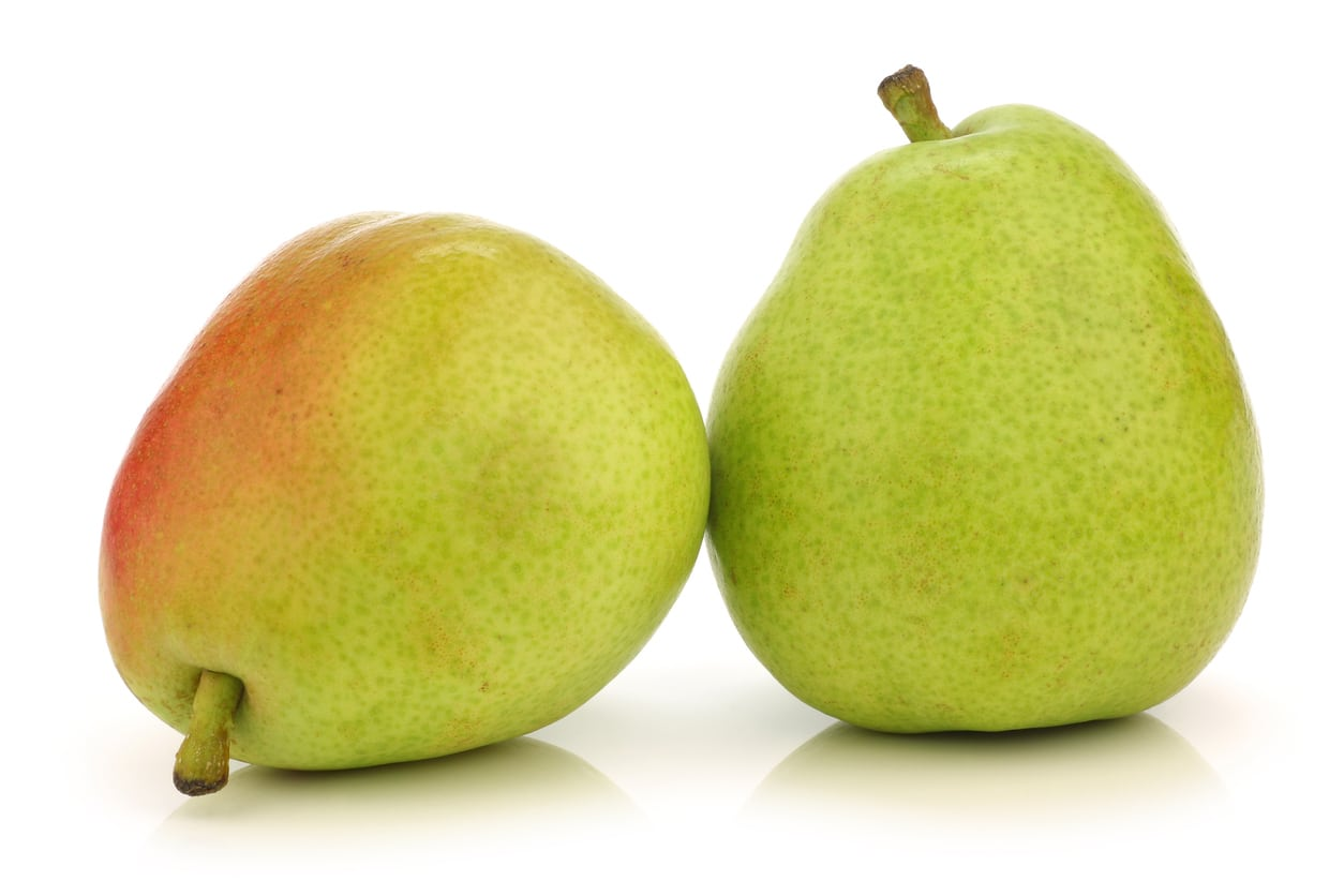 1549033873 what is a green anjou pear variety takeseeds com - What Is A Green Anjou Pear Variety