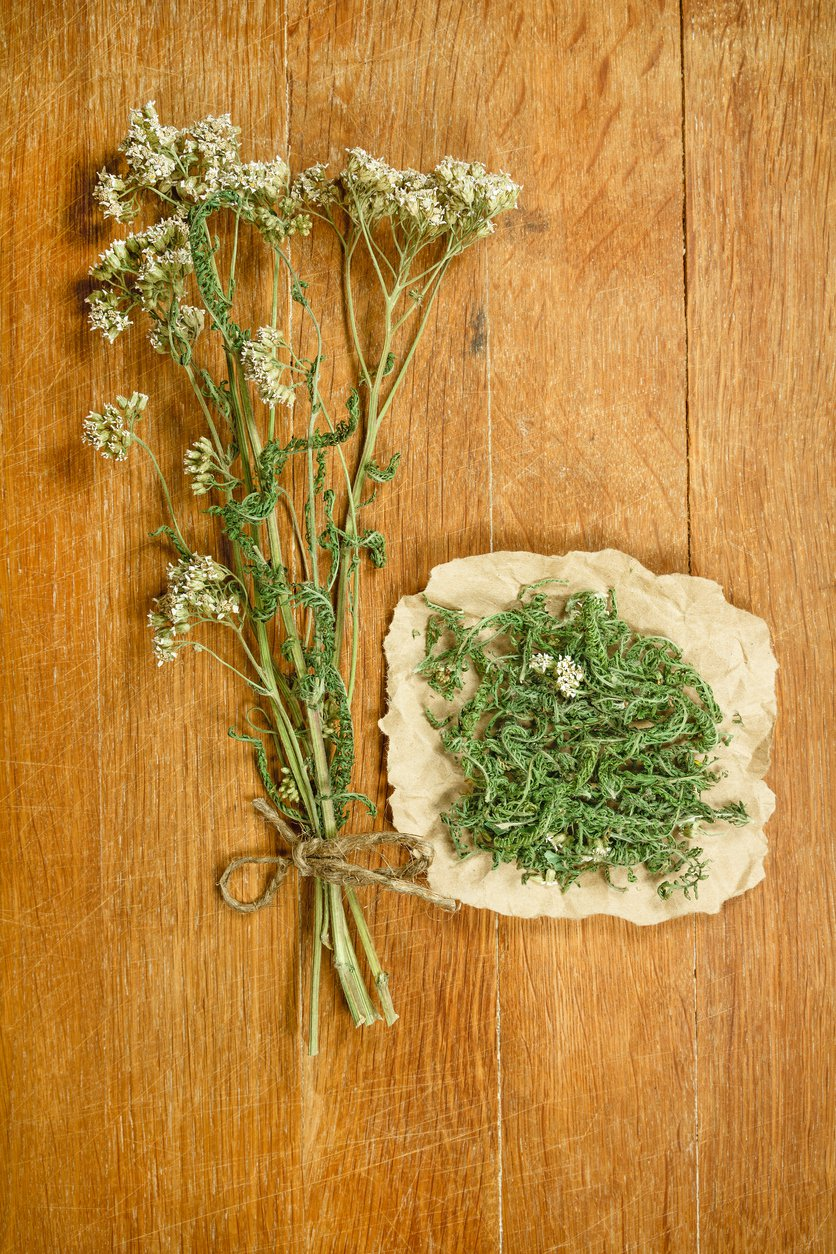 1549423160 medicinal edible and herbal yarrow plants takeseeds com - Medicinal, Edible, And Herbal Yarrow Plants