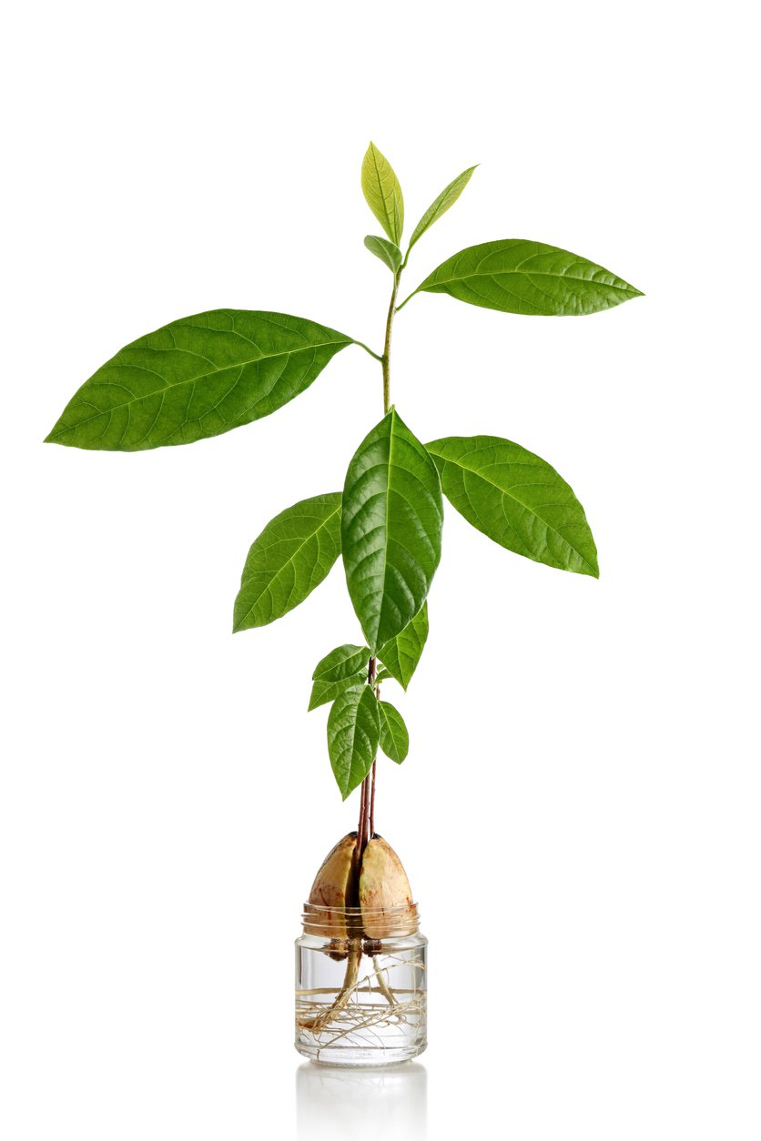 1550253153 learn about plants with roots growing in water takeseeds com - Learn About Plants With Roots Growing In Water
