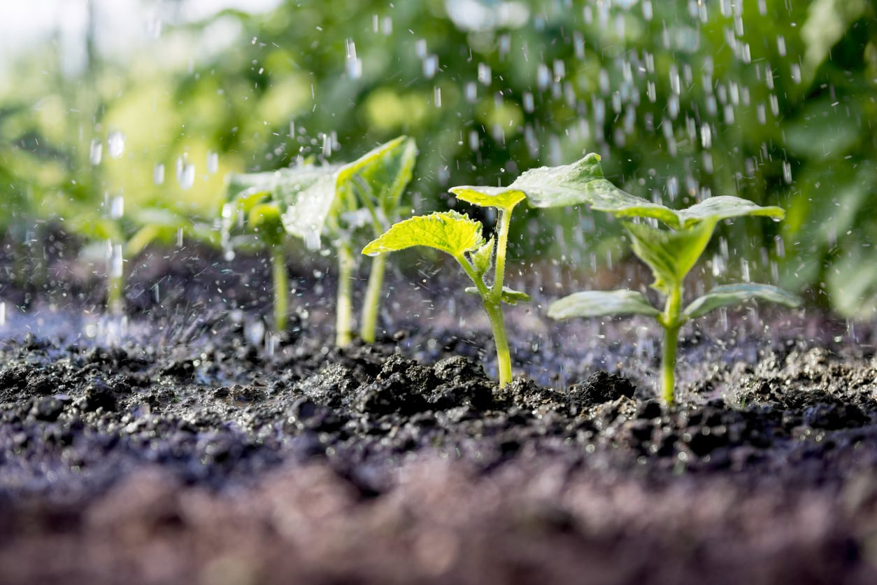 1550817555 what is fertigation how does fertigation work and how to do it takeseeds com - What Is Fertigation – How Does Fertigation Work And How To Do It