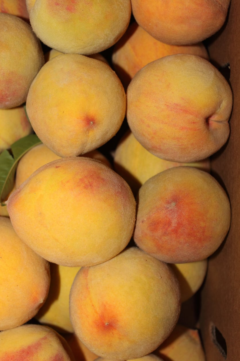1552245443 how to care for elberta peaches takeseeds com - How To Care For Elberta Peaches